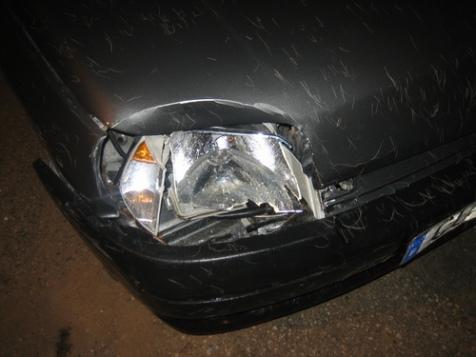 Así me dejó el coche el ciervo